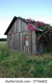 Pioneer Home Overgrown With Roses, Dexter, Oregon