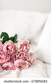 Pion-shaped Pink Roses lie on White Sheets. Morning Mood