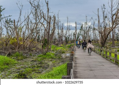 Pipa Lake And The Bikeway with Dead Woods After The Destruction of Typhoon at Taitung Forest Park, Taitung, Taiwan