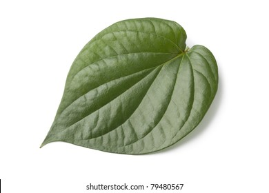 Piper betle leaf on white background
