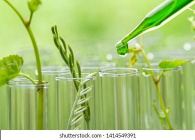 Pipette, die grüne Probe-Chemikalie über junge Probepflanze im Reagenzglas abtropft , biotechnologisches Forschungskonzept
