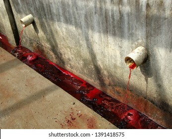 Piping of blood draining of cattle in a slaughterhouse.
