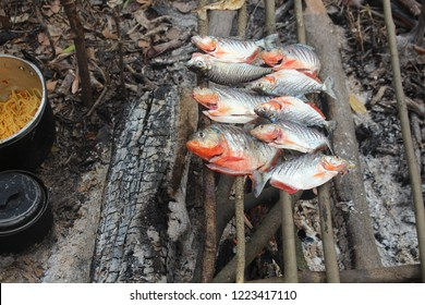 piranha fish meal in the amazonas river