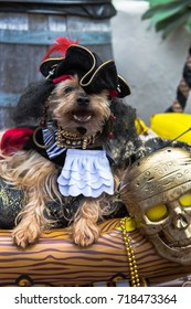 Pirate dog on her ship