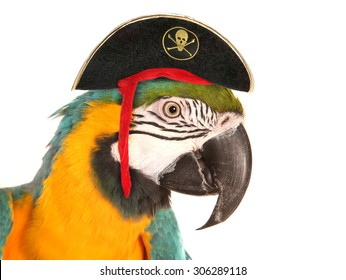 pirate macaw parrot studio cutout
