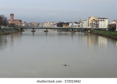 Pisa - Italy - 5/2/2017 - The dolphin swimming in the Arno river