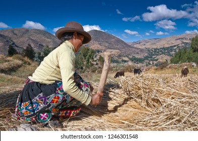 Pisac, Peru - August 8 2011: Woman farmer working in a comunity called Amaru, near to Pisac