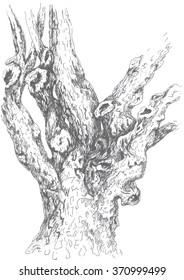 pistachio, old tree, ink