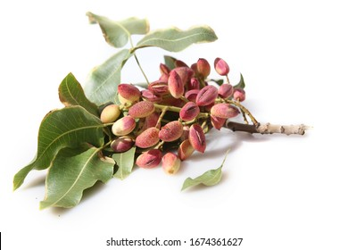 Pistachios on a branch in white background.