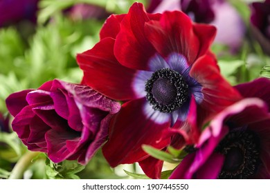 The pistils and stamens, the heart of the flower. Close up anemones in glass vase. The concept of a florist in a flower shop. Wallpaper.