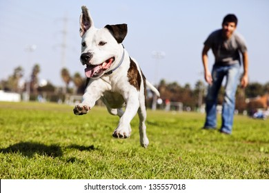 Dog Owner Images Stock Photos Vectors Shutterstock