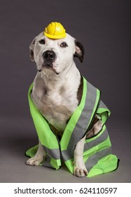 Pit Bull dog wearing a neon yellow with reflective stripes saftey vest, and a tiny funny looking yellow safety helmet on his head.