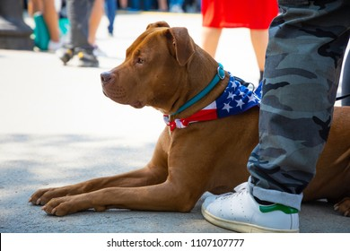 Pitbull dog laying down near his owner legs on the street