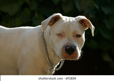 Vicious Dog Attack Images, Stock Photos & Vectors | Shutterstock