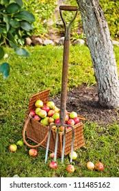 Pitchfork beside basket wicker basket of fruit in garden