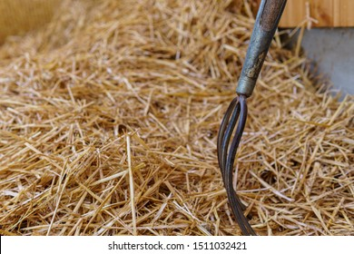 Pitchfork in Straw. Pitch Fork stuck into a heap of straw down on a farm - Closeup