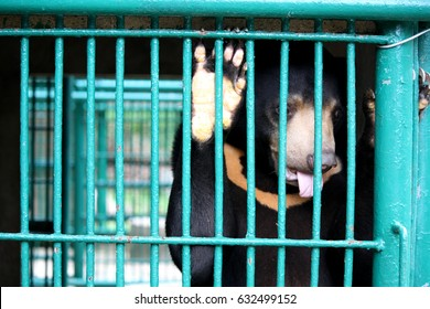 piteous's black bear in cage with sad eye waiting someday they will get freedom