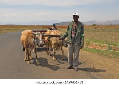 Pitseng, Lesotho, 27 October 2017, unidentified men - Two Sotho men underway with a cart. Two oxen pulls the cart and they walk. The contrast in transport if very evident: bakkie versus cart