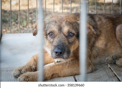 pity old dog imprison in steel cage