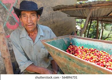 PIURA, PERU - JUNE 28: A view of a machine for coffee cherries processing operated by Peruvian guy near the city of Piura, region called Jijili. In the north of Peru, 2011.