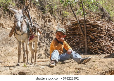 PIURA, PERU - JUNE 28: View of a boy who takes care of a donkey loaded with a bundle of sugarcane near the city of Piura, region called Jijili. In the north of Peru, 2011.