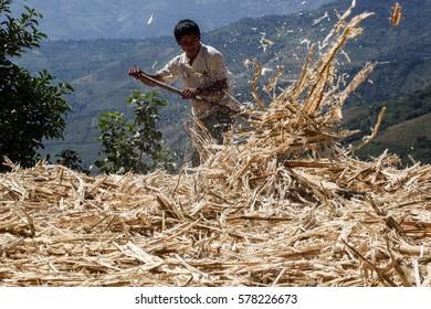 PIURA, PERU - JUNE 28: View of a man who rakes a refuse from sugarcane near the city of Piura, region called Jijili. In the north of Peru, 2011.