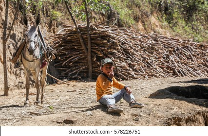 PIURA, PERU - JUNE 28: View of a boy who takes care of a donkey loaded with bundle of sugarcane near the city of Piura, region called Jijili. In the north of Peru, 2011.