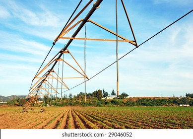 Pivot irrigation system in a newly planted potato field