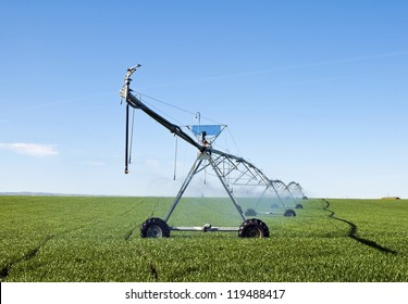 A pivot irrigation system watering a field of grain.