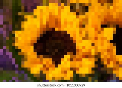 Pixelated picture of beautiful large sunflowers with a close up of a big vibrant one with space for text.