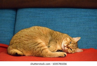 Bob Cat Images, Stock Photos & Vectors | Shutterstock
