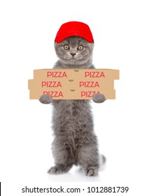 Pizza delivery cat with pizza boxes. isolated on white background