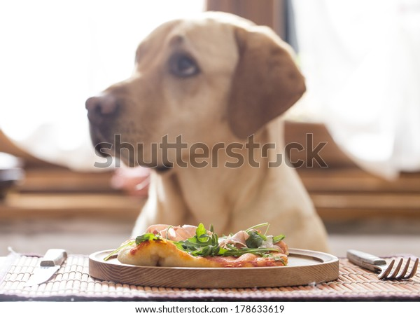 pizza with dog