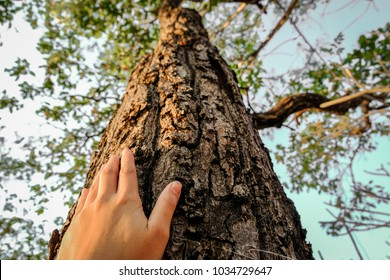 placed on the trunk of a big tree with fingers extended, symbolizing the connection between humans and nature.