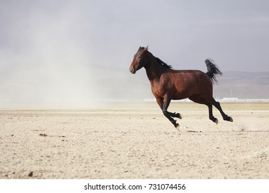 plain with beautiful horse in sunny summer day in Turkey. mustang running on dusty road