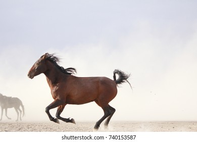 plain with beautiful horses in sunny summer day in Turkey. Herd of thoroughbred horses. Horse herd run fast in desert dust against dramatic sunset sky. wild horses