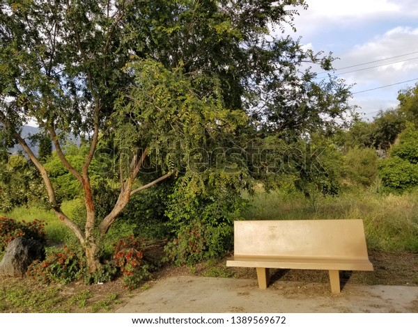 Marvelous Plain Bench Sitting Alone Front Several Stock Photo Edit Ibusinesslaw Wood Chair Design Ideas Ibusinesslaworg