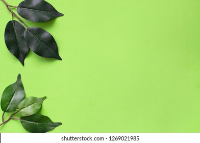 Plain green Spring nature background with tree leaves on the left side and room for text.