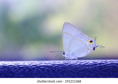 Plains Cupid butterfly is resting on the plastic bar