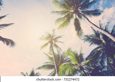 Plam tree on the white background (palm, tree, coconut)