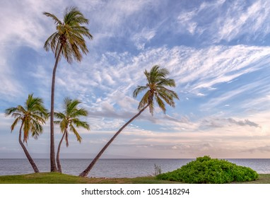 Plam trees silhouetted against beautiful clouds in the sky on a beach in Molokai, Hawii