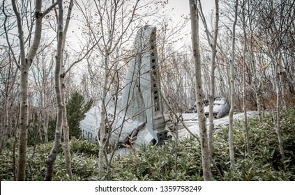 Plane crash with the forest
