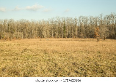 plane field in forest in autumn