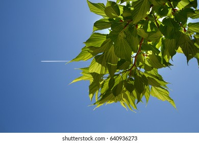 Plane is flying in a blue sky with tree leaves as a background in a bright summer day
