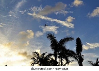 Plane flying over palm rees