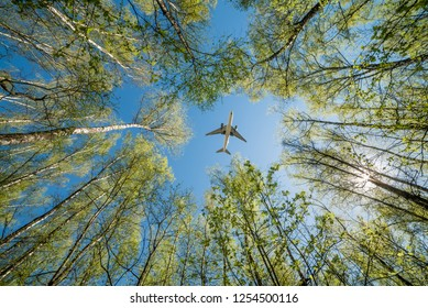 A plane over the forest