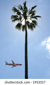 Plane past a palm tree