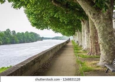 Plane tree alley along the river