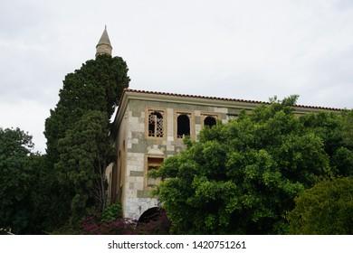 plane tree Hippocrates Kos Town Kos Island Greece May