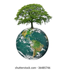 Planet earth featuring the north and south american continents, with an oak tree in full leaf in summer at the northerly position on the globe, over white background.